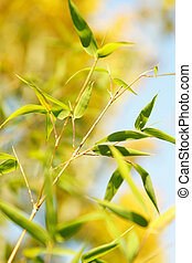 Bamboo - A shot of bamboo leaves with blurred background