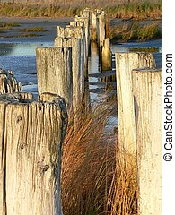 Tidal posts - A row of tidal posts in Eastern Passage