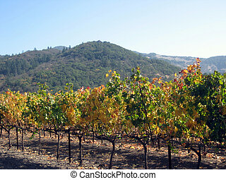 Wine Country - Vineyard in foreground with mountain in...