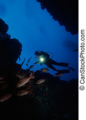 Diving Under Water - Adventure Diving on a Coral Reef,...
