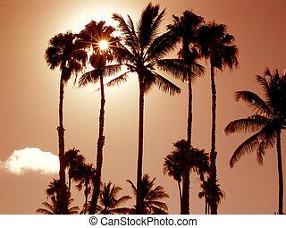 Molokai Sunset - Captured on the beautiful Hawaiian island...