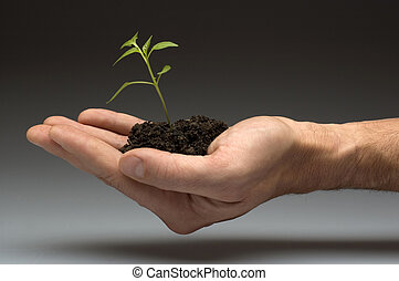 plant - small plant in soil on a hand close up