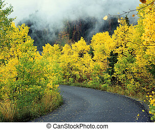 Aspen Road1 - Aspen trees along Utah Highway 92 in the Mount...