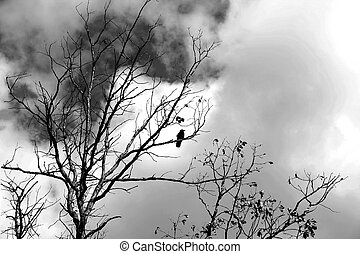 Black Crow - Silhouette of black crow perched on a leafless...
