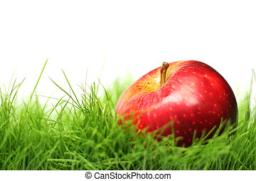 Apple in the Grass - Red apple in green grass with white...