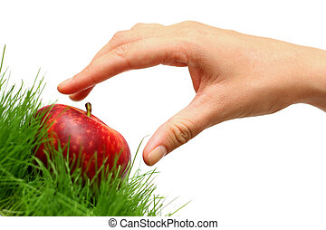 Picking Apples - Woman\\\'s hand collecting a red apple from...