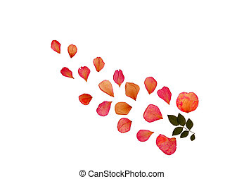 Rose Petals - Abstract design of pressed dried rose petals...