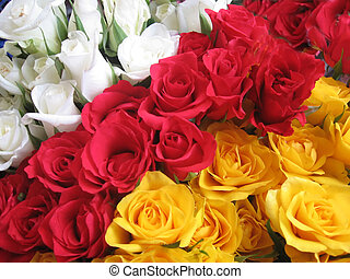 Roses - Red, white and yellow roses