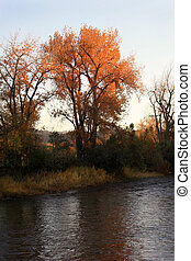 First Light - Autumn foliage glows brightly as the leaves...