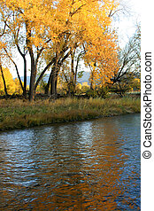 Golden Reflections - Autumn foliage, brilliant with the...