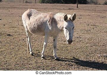 Donkey - A donkey on a farm.