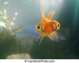 crazy fish - the crazy pet  fish