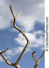 perch against blue sky - sere perch against blue sky -...