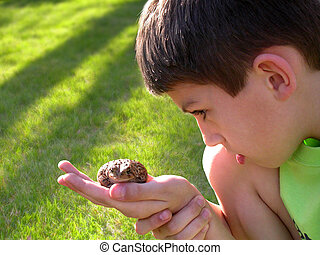 boy curious of toad - a young boy examining a toad on a...