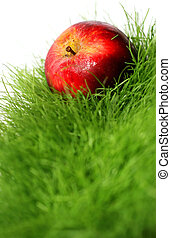 Apple in Grass - Red apple in bright green grass with white...