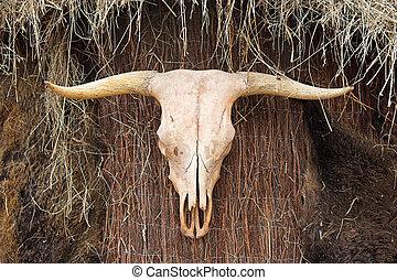 動物, 頭骨