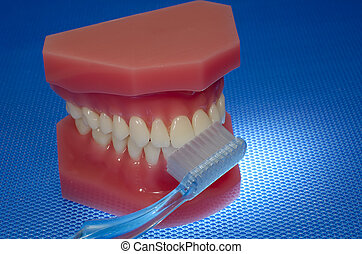 Oral Health - Photo of a Mouth Model and a Toothbrush - Oral...