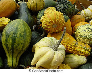 Gourds - Fall gourds on display in a market