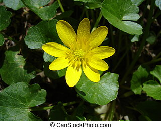 Yellow Forest Flower - Yellow forest flower
