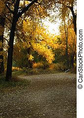 Autumn Light - Mysterious path through dark forest is...