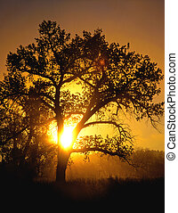 CottonwoodSunrise - The morning sun shining through a...