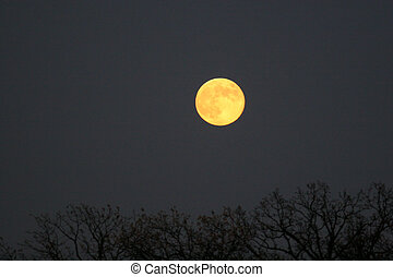 Yellow Moon - Yellow october moon rising over field