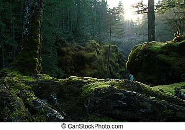 Enchanted forest - Sunrays filtering through a deep dense...