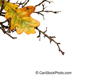 Twigs - Bare twig with oak leaf on white background