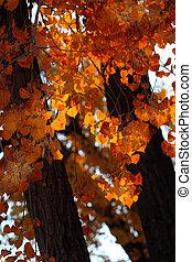 Autumn Color - The rising sun back lights beautiful orange...