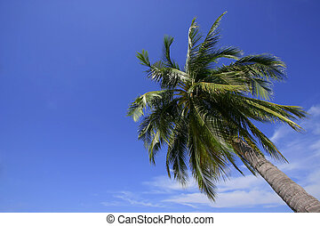 Single Palm Tree