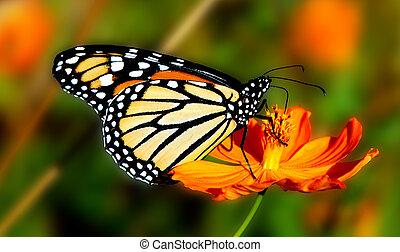 Sweet Nectar