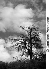 Tree and Clouds - Lone skeletal tree with giant puffy...
