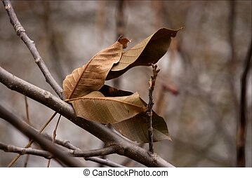 Falen leaves - Fallen leaves on a branch