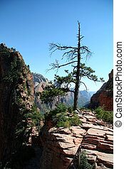 Tree on Mountain at Zion Canyon