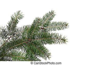 Christmas tree frame - Christmas tree twigs on a white...