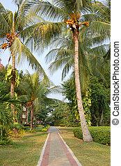 Coconut path