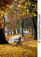 Autumn park - Park with old trees and recreation trail in...