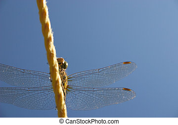dragonfly on the line