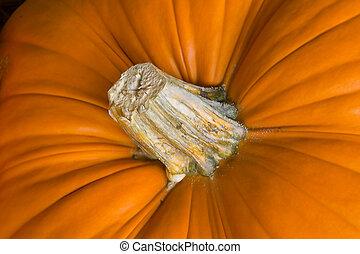 Pumpkin-2 - Closup of a pumpkin and its peduncle