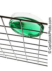 Petri Dish - Plastic petri dish on metal rack with green...