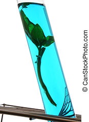 Science - Plant in test tube with blue fluid and white...