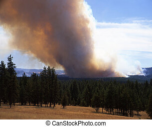 ForestFireHorizontal - A forest fire in Oregon.