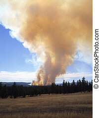 ForestFireVertical - A forest fire in Oregon.