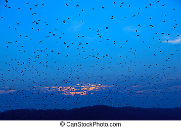 The Birds - Autumn Migration - As the sun was setting,...