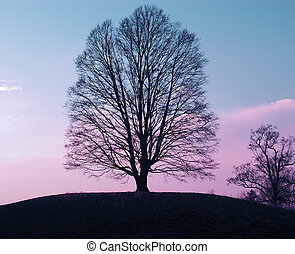 Tree Silhouette against a blue and pink cloudy sky.