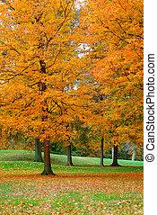 Golden Leaves 3