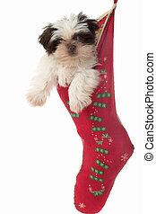 Puppy Hanging Around In Christmas Stocking 2 - Cute Shih Tzu...