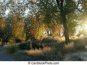 First Light - First light of morning illuminates autumn...