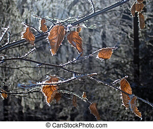 winter forest (2) - Twig with some yellow rime leafs on...