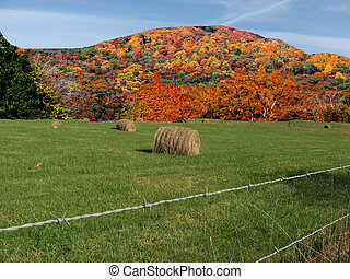 Pastoral Scene - Field of hay with burst of color in...
